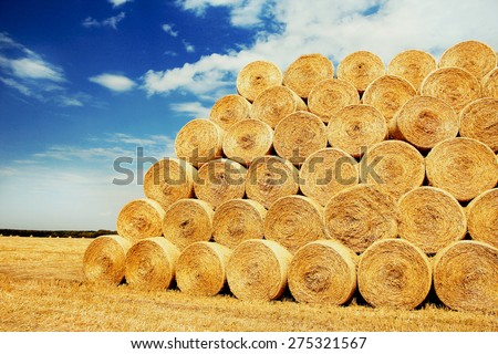 bales of hay on the field - stock photo