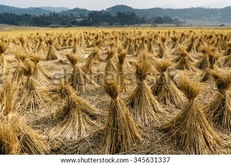 Bales of straw in Nepal - stock photo