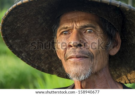 BALI - OCTOBER 10. A local rice farmer checks his plantation on October 24, 2013 in Bali, Indonesia. Indonesia is currently the third-largest producer of rice in the world. - stock photo