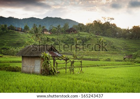 Bali Sunrise in the Rice Fields. The most beautiful rice terraces in all of Bali can be seen in the village of Sidemen, Bali, seen here at dawn. - stock photo
