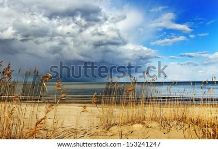 Baltic sea coastline with grasses. - stock photo