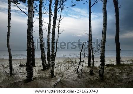 Baltic sea shore in dramatic light - stock photo