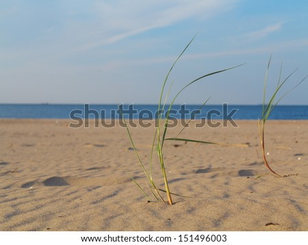 Baltic sea with grassy sand dunes in the foreground. Beach and water. - stock photo