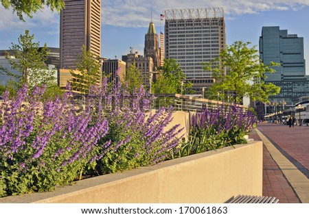 Baltimore's Inner Harbor Harbour framed by springtime flowers, including catmint Nepeta faassenii and other purple blooms, with the city skyline, Maryland, USA - stock photo