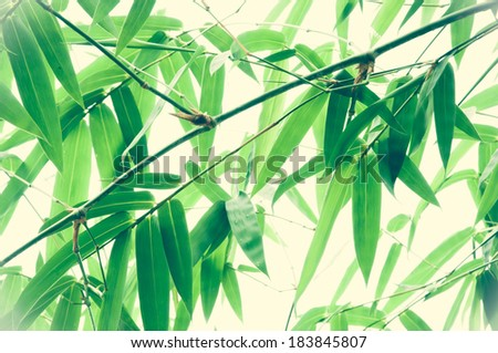 Bamboo background, Oriental style - stock photo