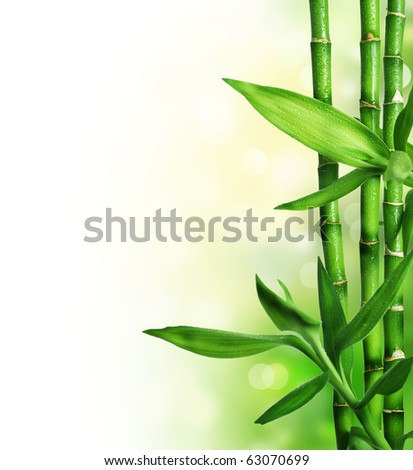 Bamboo Border - stock photo