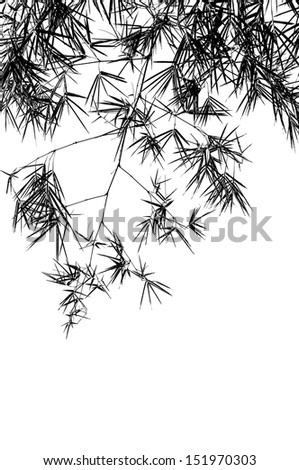 Bamboo branches isolated on white - stock photo