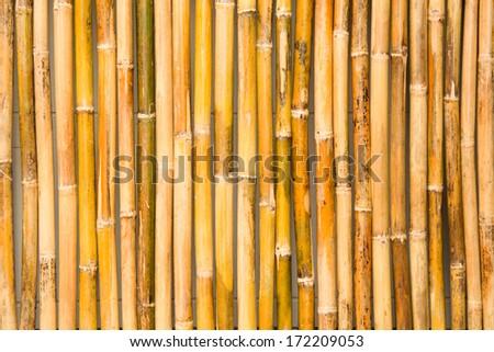 bamboo fence background - stock photo