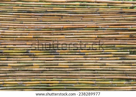 bamboo fence  in garden when i walk - stock photo