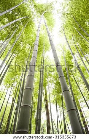 Bamboo field - stock photo