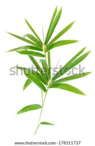 Bamboo foliage - stock photo