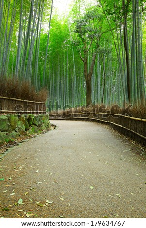 Bamboo forest and pathway - stock photo