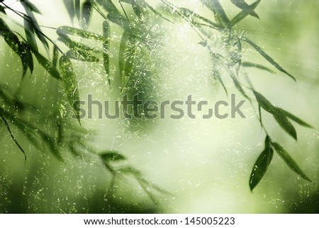 Bamboo forest,bamboo leaves in backlight. - stock photo