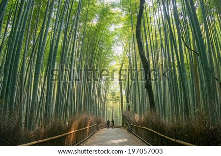 Bamboo forest in Arashiyama, Kyoto, Japan.  - stock photo