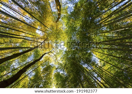 Bamboo forest in Japan - stock photo