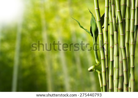 Bamboo Forest in Japan. Bamboo Groove in Arashiyama, Kyoto - stock photo