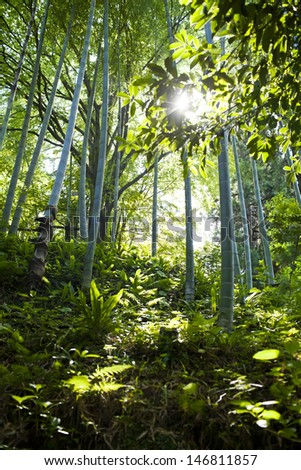 Bamboo forest in the spring - stock photo
