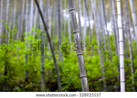 Bamboo Forest Trees in Anhui Province, China - stock photo