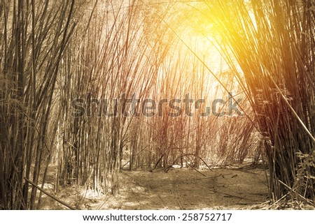 Bamboo forest. Vintage filter. - stock photo