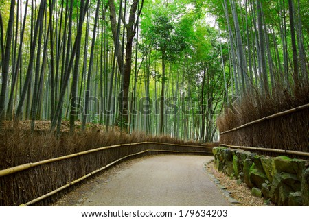 Bamboo forest with road - stock photo