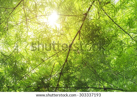 Bamboo forest with sunlight. - stock photo