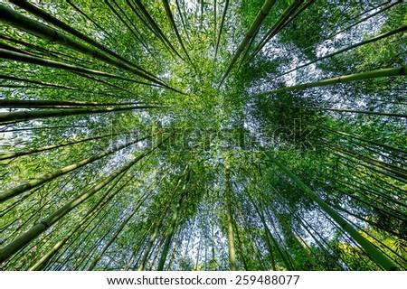 Bamboo garden. - stock photo