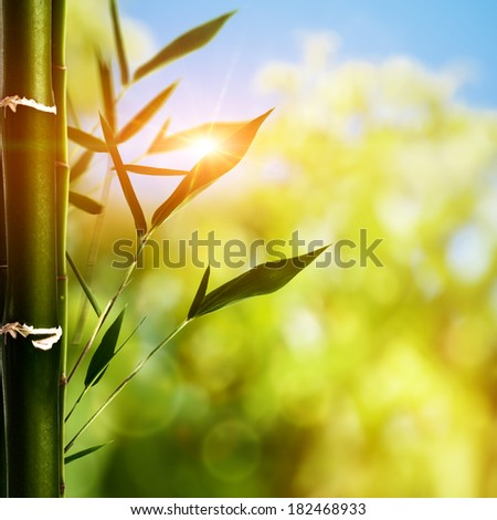 Bamboo grass against abstract natural backgrounds - stock photo