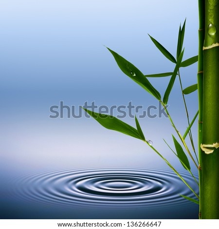 Bamboo grass with dew droplets. Abstract environmental backgrounds - stock photo