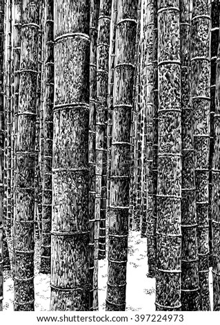 Bamboo grove / forest. Black and white dashed style sketch, line art, drawing with pen and ink. Retro vintage picture. - stock photo