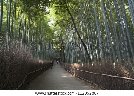 Bamboo grove in Arashiyama in Kyoto - stock photo