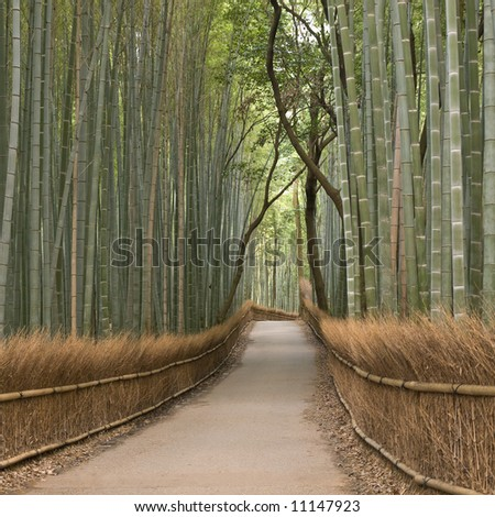 Bamboo grove in Arashiyama in Kyoto, Japan near the famous Tenryu-ji temple. Tenryuji is a Zen Buddhist  temple which means temple of the heavenly dragon and is a World Cultural Heritage Site. - stock photo