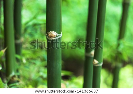 bamboo in the jungle - stock photo