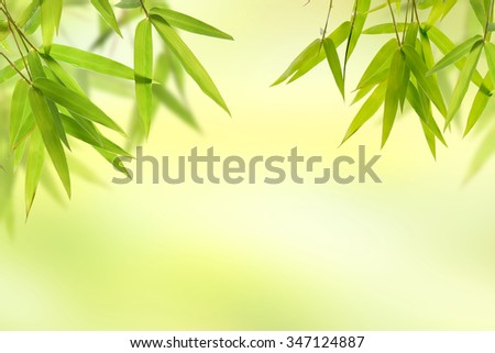 Bamboo leaf and light soft green background  - stock photo
