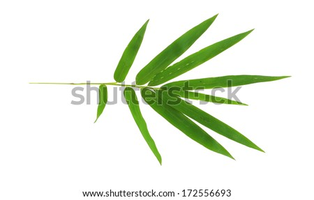 bamboo leave isolated on white background - stock photo