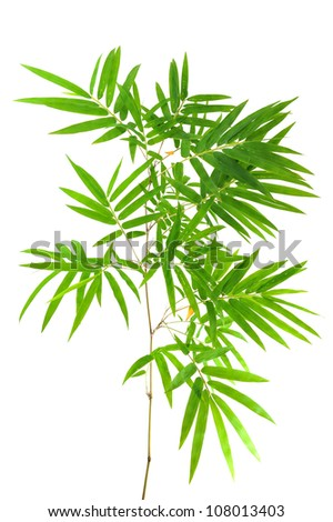 bamboo- leaves - stock photo