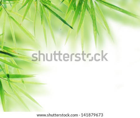 Bamboo leaves frame on white background - stock photo
