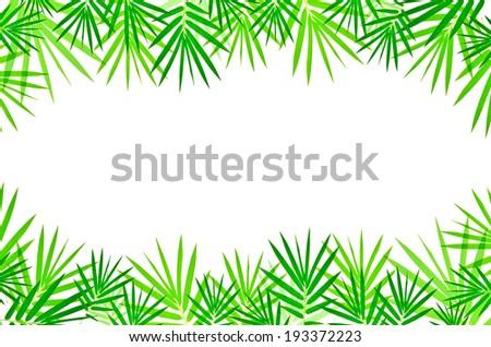bamboo leaves isolated on white background - stock photo
