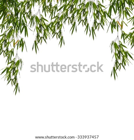 bamboo leaves isolated on white background. - stock photo