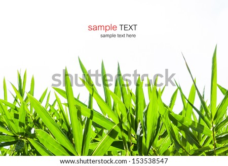 bamboo leaves isolated on white background with sample text for design  - stock photo