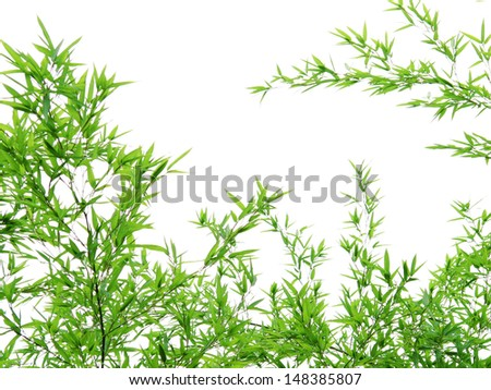 Bamboo leaves on a white background - stock photo