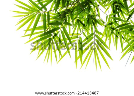 Bamboo leaves on white - stock photo