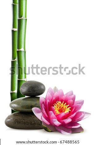 bamboo, lotus flower and pebble - stock photo