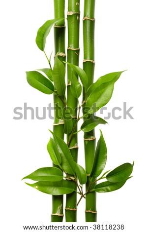 bamboo ornament - stock photo