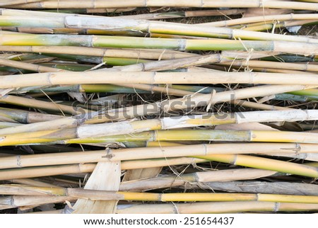 Bamboo stack for material - stock photo