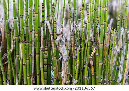 Bamboo stalks - stock photo