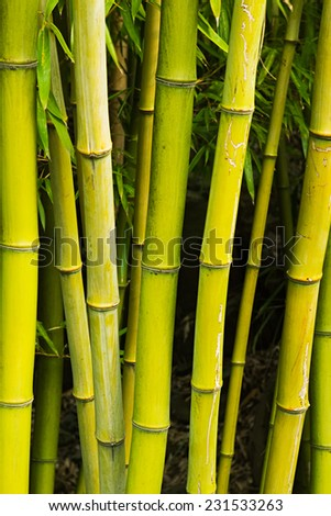 bamboo stalk stock photos images pictures shutterstock