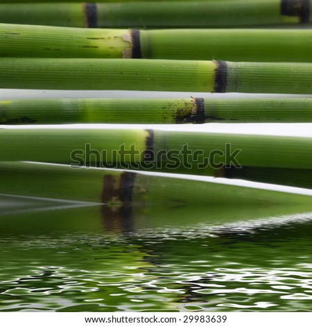Bamboo stem with reflection - stock photo