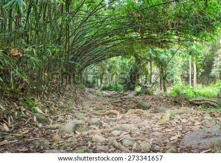 bamboo Trees Tunnel. - stock photo