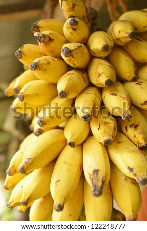 Banana bunch in market - stock photo