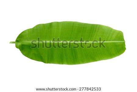 banana leaf on white background - stock photo